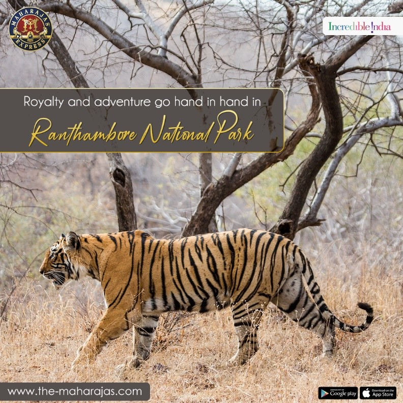 Embrace the wildnerness in Ranthambore National Park aboard the Maharajas' Express Journey